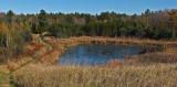 Beaver Pond City Forest 10-18-17.jpg