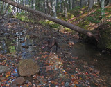 Kelley - Hunters Brook 10-19-17 .jpg
