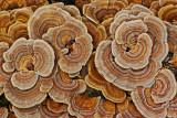 Fungus - Little Moose c 11-13-11.jpg