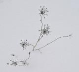Weeds - Easment 12-31-10 ed-pf.jpg