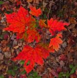 Leaves  Partridge Pond Trail b 10-7-17.jpg