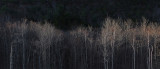 Beaver Pond- Canon Brook Trail b 11-14-13-ed.jpg