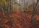 Branch Lake  Trail c 10-24-17.jpg