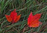 Leaves Branch Lake  Trail 10-24-17.jpg