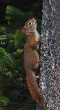 Squirrel Little Long Pond 9-17-17-ed .jpg