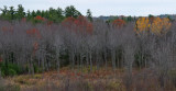 Trees - City Forest 10-27-14-ed.JPG
