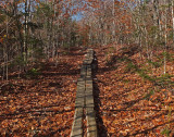 Partridge Pond Trail  10-31-17.jpg