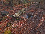 Kelley - Partridge Pond Trail  10-31-17.jpg