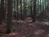 DeMeritt Forest 11-7-17.jpg