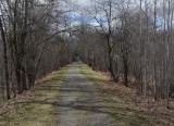 Rail Bed Essex Woods 4-29-15.jpg