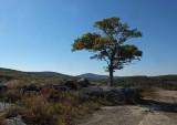 Tree Blueberry Barrens 10-7-15.jpg