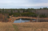 Beaver Pond City Forest 11-12-17.jpg