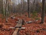 Branch Lake  Trail d 10-24-17.jpg