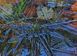 Ice and Leaves -   b 12-11-11-ed.jpg