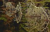 Fernald Cove 12-3-11-ed.jpg