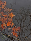 Leaves in Water PB Snowmobile Trail 11-20-17.jpg