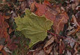 Leaf  PB Snowmobile Trail 11-20-17.jpg