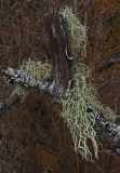 Lichen PB Snowmobile Trail 11-20-17.jpg