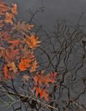 Leaves in Water PB Snowmobile Trail 11-20-17.jpg