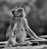 Monkey .jpg