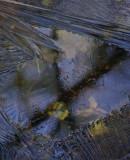 Ice West Side Little Long Pond 12-11-11-ed.jpg