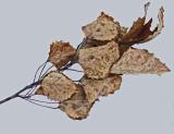 Leaves - Walden 11-26-11-ed.jpg