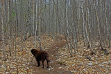 100 Acre Wood Trail Trail  Perch Pond 5-8-15-ed.jpg