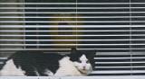 Cat  - Bangor 5-30-12-ed2.jpg