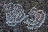 Lichen - Potholes Path 11-14-13.jpg