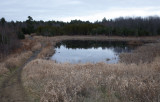 Beaver Pond City Forest 12-5-17.jpg