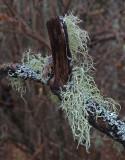 Lichen Trail Along Kenduskeag 12-6-17.jpg