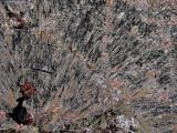 Lichen d -Walden 12-22-10-3.jpg