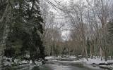 Ducktrap River b 1-17-10-ed-pf.jpg