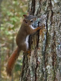 Squirrel - Catherine Mt Trail.9-28-14-ed-npl.jpg