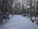 Logan Rd. DeMeritt Forest 12-16-17.jpg