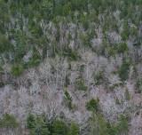 From Penobscot Mtn. Trail 3-21-10.jpg