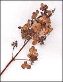 Plant on Snow  Neighborhood 12-17-ed.jpg