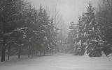 Lane  From Balsam Rd.12-25-17.jpg