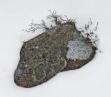 Lichen 12-25-09-ed.jpg