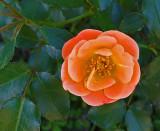 Flower  Bangor 9-20-15.jpg