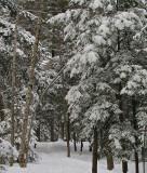 Prentis Woods - ed 1-18-10.jpg