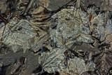 Leaves and Ice  Petit Manan 1-8-12-ed.JPG