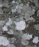 Lichen- Jesup Path  2-14-11-ed.jpg