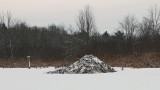 Beaver Pond - City Forest 12-10-13-ed.jpg