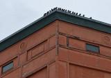 Building and Pigeons - Bangor 3-15-14-pf.jpg