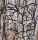 Tree Along Kenduskeag 3-28-14-pf-ed.jpg