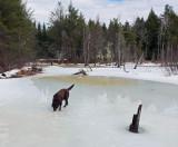 Kelley - Beaver Pond  Sunkhaze 3-2-17-ed.jpg