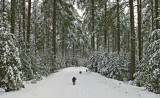 The Dogs - Loop  Rd. - City Forest 12-28-13-ed.jpg