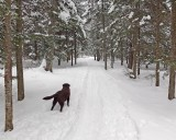 West Trail - City Forest 12-20-13.jpg