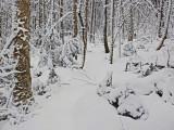 Frye Mt Trail b 12-21-14-ed.jpg